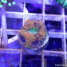 0128 Fire & Ice Acan Lord