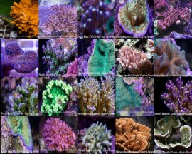 20 Fantastic SPS Frags For $249.99 Delivered