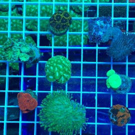 Deal of the Day - Colorful Slice of the Reef