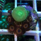 08 Agent Orange Zoas/Toxic Palys