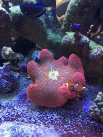 Anemone Cradle and Hidey-Hole by Natural Reef Habitats