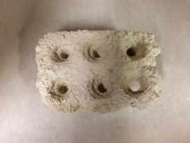 6-Frag Coral Cradle