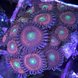 Lord of the Rings Zoas
