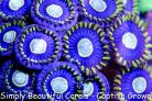 Zoa/Paly Super Pack
