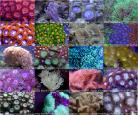 Beginner Coral Frag Pack 10 Corals with FREE Shipping